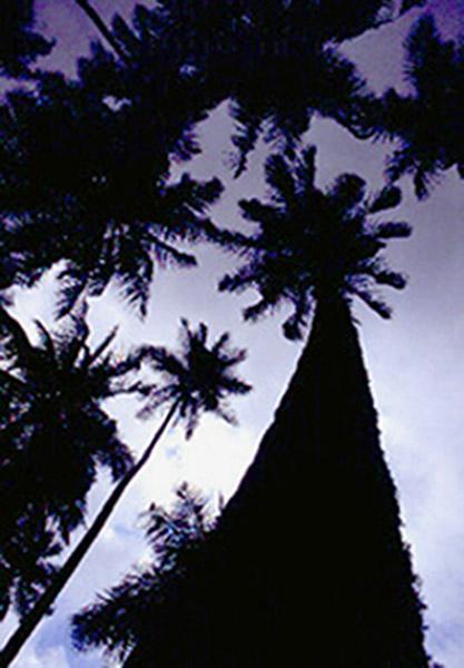 Foto 2: Un punto de vista / (c) Mamuga